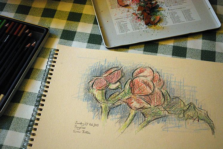 Begonias 1