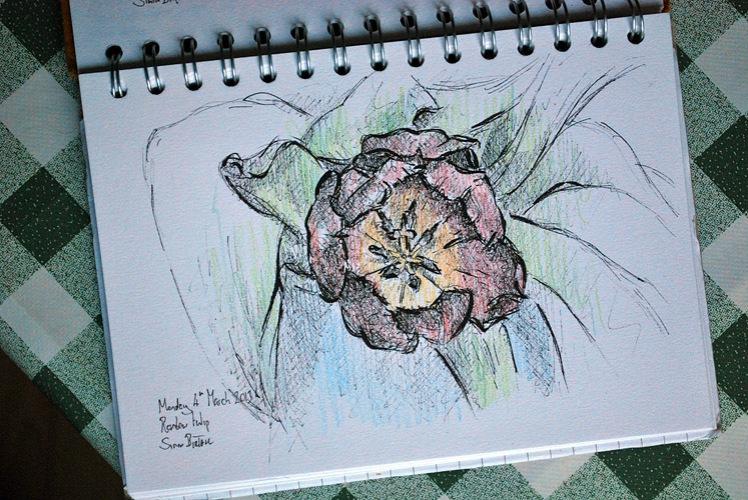 Drawing of rainbow tulips