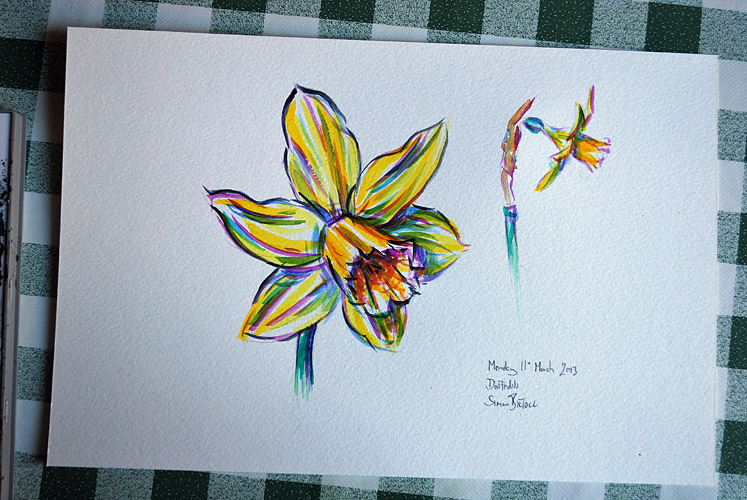 Watercolour painting of daffodils