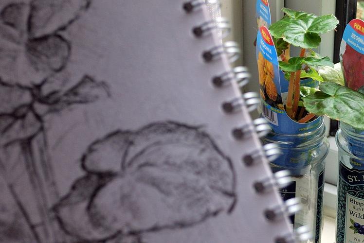 Drawing begonias