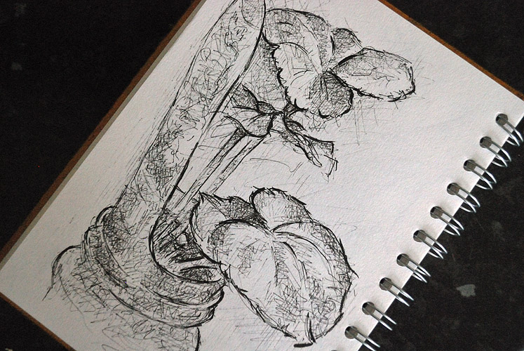 Drawing of yellow begonia