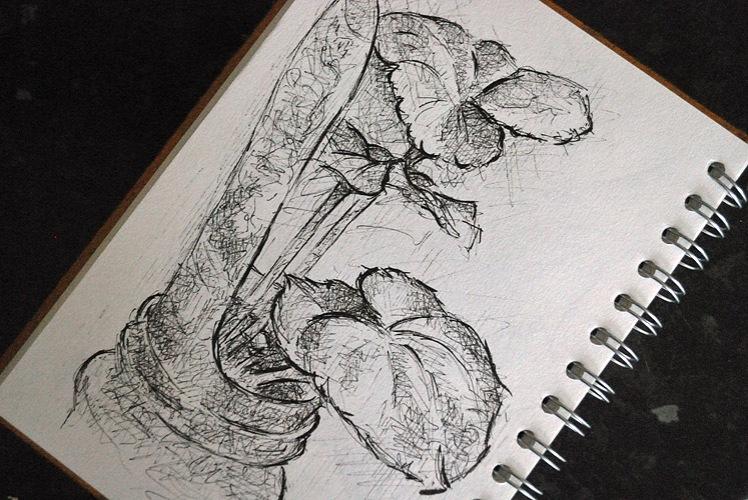 Drawing of yellow begonia