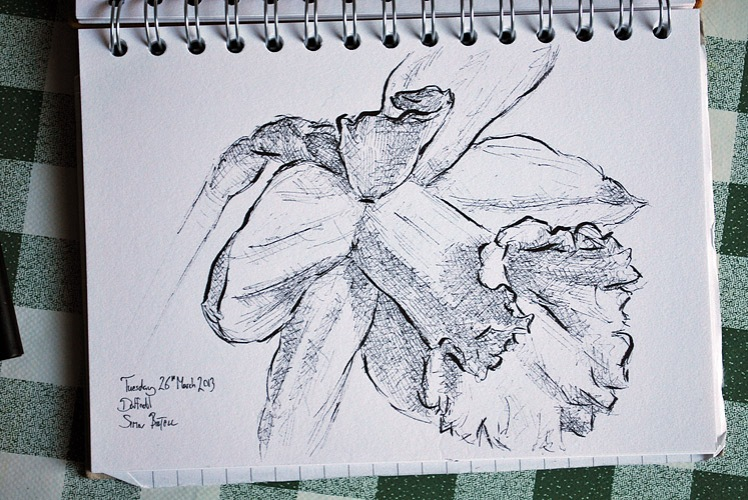 Pen drawing of a daffodil