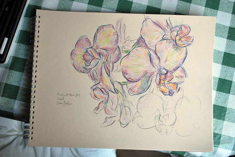 Pencil drawing of orchid plant