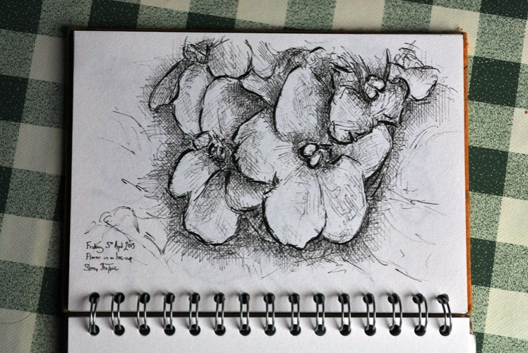 Drawing of a primula