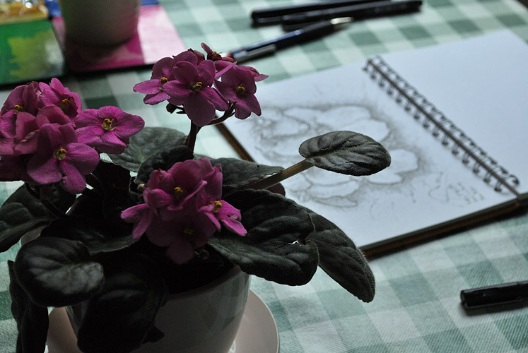 Drawing a primula in a tea cup