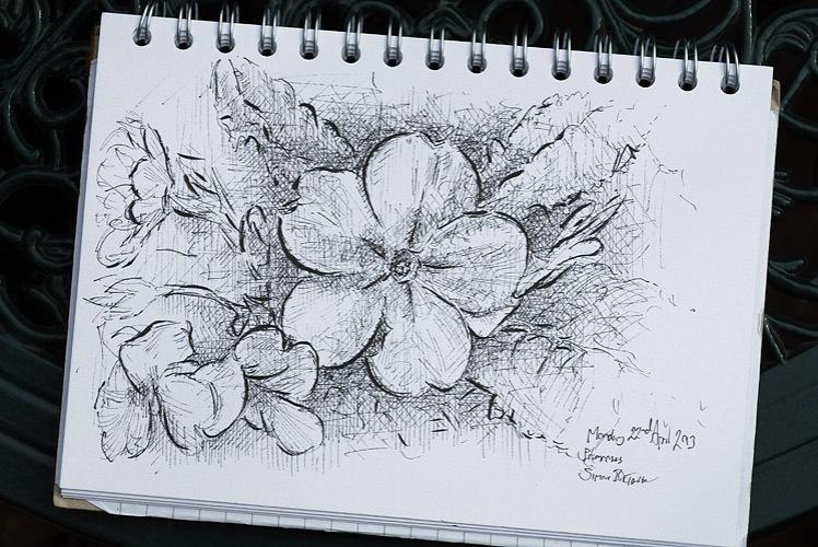 Drawing of primroses