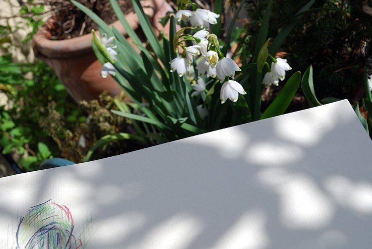 Drawing snowdrops by Simon Birtall