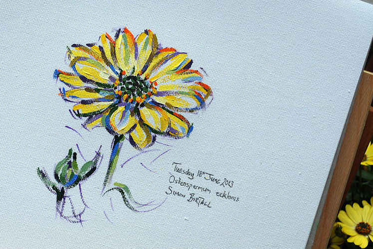 Painting of osteospermum ecklonis by Simon Birtall