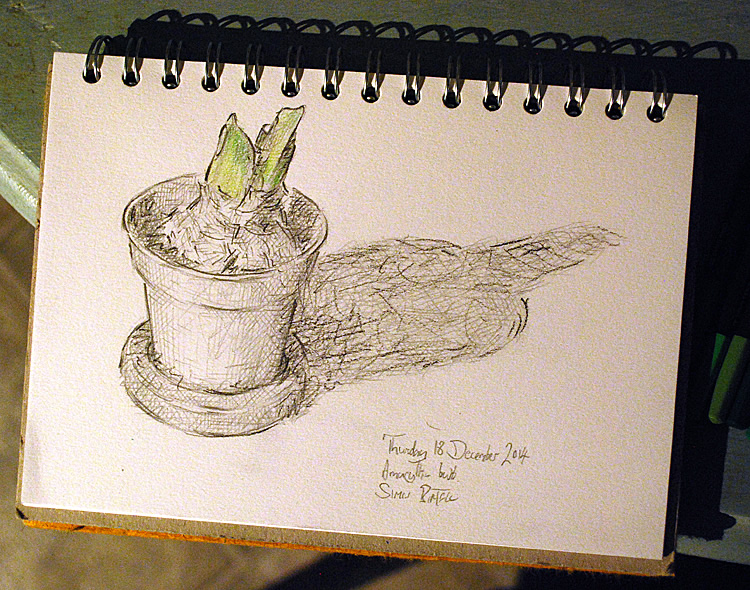 Drawing of an amaryllis plant