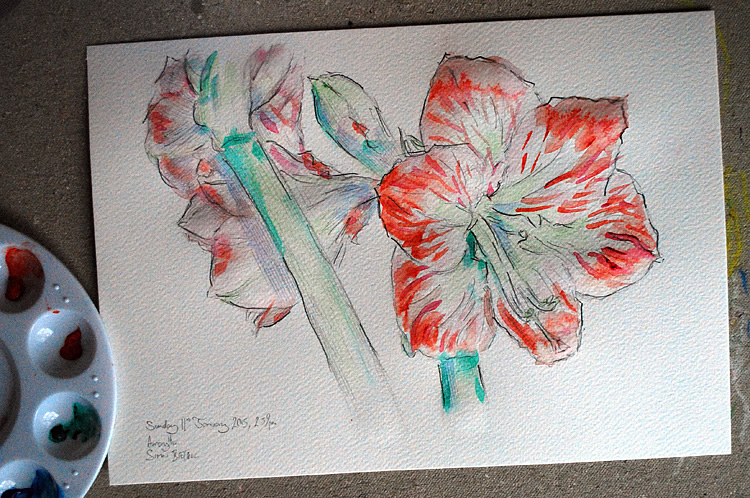 Watercolour painting of an amaryllis