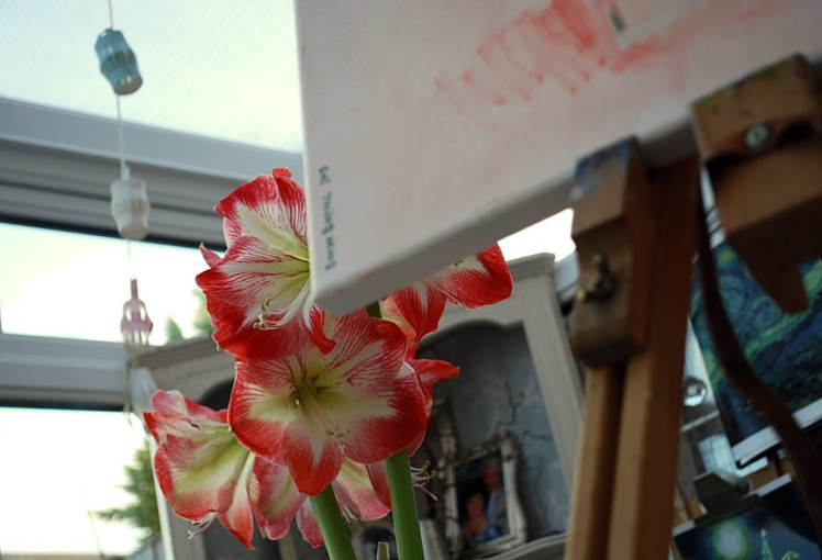 Painting an amaryllis plant
