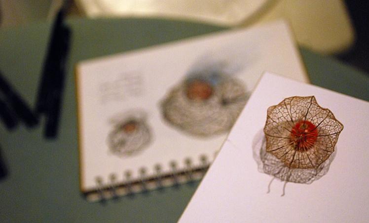 Drawing Chinese Lantern husks